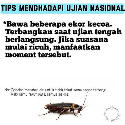 tips_kecoa_un.jpg